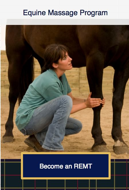 equine massage therapy Equine massage therapy schools teach massage therapy classes for horses, along with benefits and cautions instructional massage videos also teach this therapy if you want to learn at home.